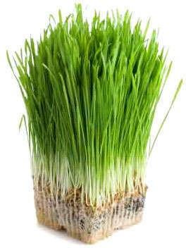 Poate suc de iarbă din orz să vă revizuiască sănătatea?