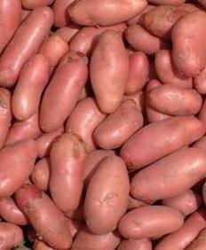 Cartofi roz Romania kg (vrac)