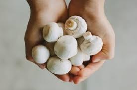 Ciuperci Champignon Vrac