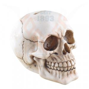 Pusculita Craniu 16cm