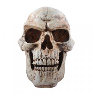 Statueta Craniu Uman 47cm