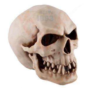 Statueta craniu The Orc 20cm