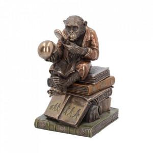 Statueta/ Cutie bijuterii Studiul Teoriei Evolutiei 17.5 cm