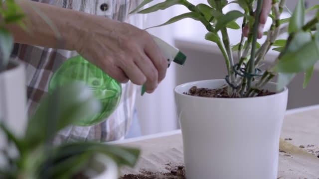 Întreținerea plantelor in apartament