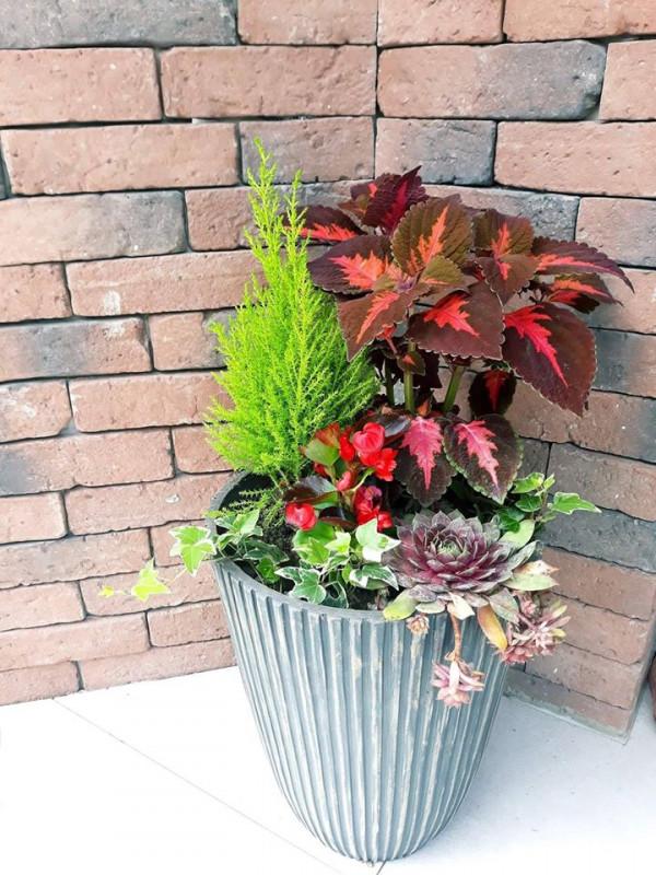 8 sfaturi utile pentru întreținerea plantelor in balcon