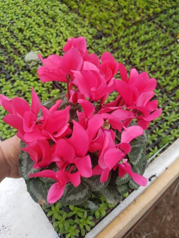 Produse necesare pentru ingrijirea corecta a plantelor