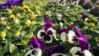 Vara a venit, grădina ta este pregătită? Dacă nu, află cum o poți amenaja