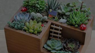 Creați o mică grădină în balcon în 4 pași simpli