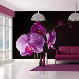 Fototapet - stylish orchis