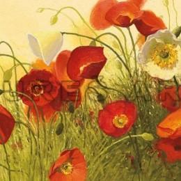 Poster cu flori Maci in soare