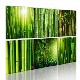 Tablou - Bamboo has many faces