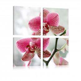 Tablou floral Orhidee fancy