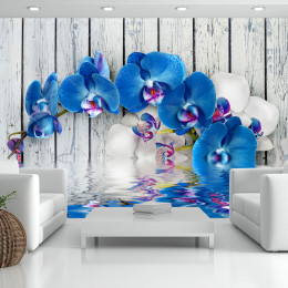 Fototapet - Cobaltic orchid
