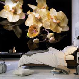 Fototapet - Orchids in ecru color