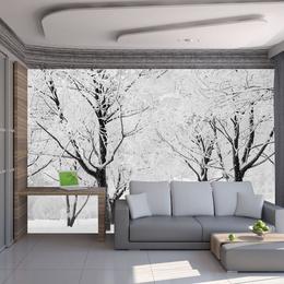 Fototapet vlies Copaci, peisaj de iarna