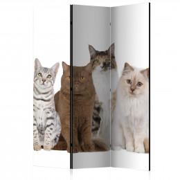 Paravan - Sweet Cats [Room Dividers]