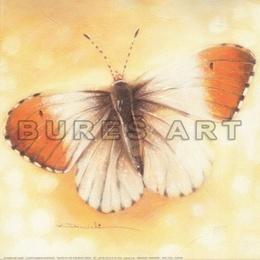 Tablou Fluture diafan I