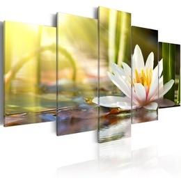 Tablou - Sunny Lotus