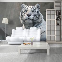 Fototapet - Bengali tiger in zoo