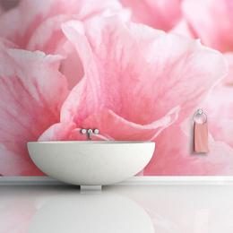 Fototapet - Pink azalea flowers