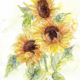 Fototapet vlies Floarea soarelui pictata