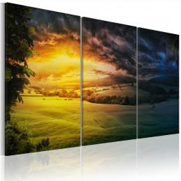 Tablou canvas Taramul unde rasare soarele