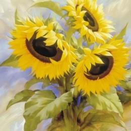 Tablou Floarea soarelui inramat, 60x80 cm