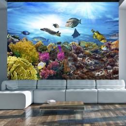 Fototapet - Coral reef
