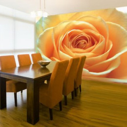 Fototapet floral Trandafir portocaliu