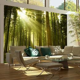 Fototapet - Pine forest