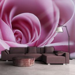Fototapet - Pink rose