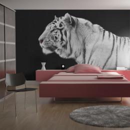 Fototapet - White tiger