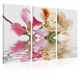 Tablou canvas Orhidee cu pete colorate