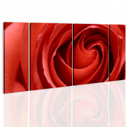 Tablou - Passionate rose