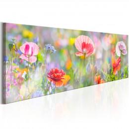 Tablou - Rainbow of Morning Poppies