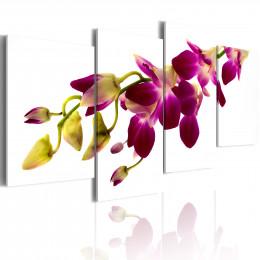 Tablou Stralucirea orhideei