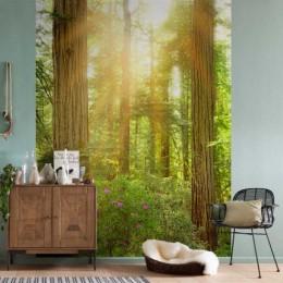 Fototapet vlies padure Redwood