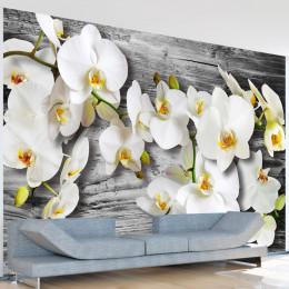 Fototapet - Callous orchids III