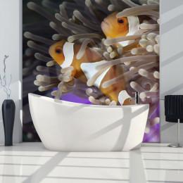 Fototapet - Clownfish