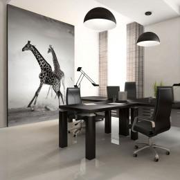 Fototapet - Giraffes