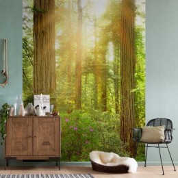 Fototapet vlies padure Redwood
