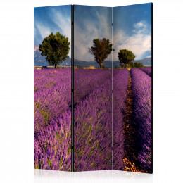 Paravan - Lavender field in Provence, France [Room Dividers]