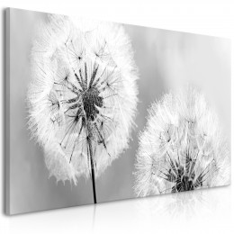 Tablou - Fluffy Dandelions (1 Part) Grey Wide