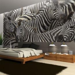Fototapet - Herd of zebras