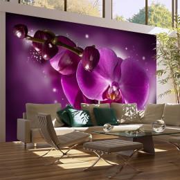 Fototapet vlies Basm cu orhidee