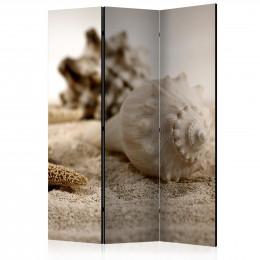 Paravan - Beach and shell [Room Dividers]