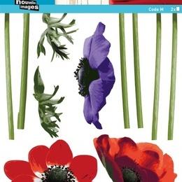 "Sticker de perete floral ""Anemone"""
