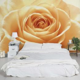Fototapet vlies floral Trandafir portocaliu