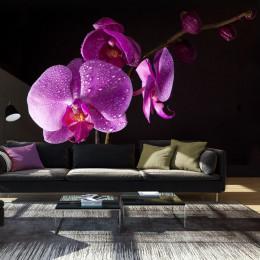 Fototapet vlies Orhidee mov pe fundal negru