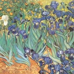 Poster Van Gogh, Irisi,